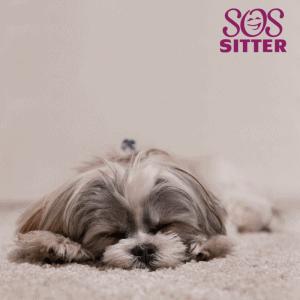 pet sitter questions